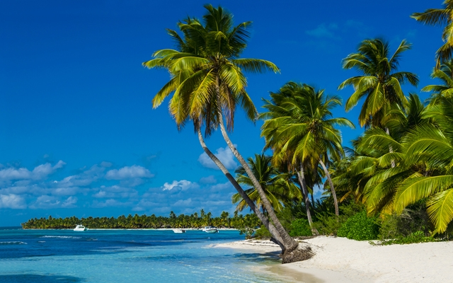 Above: Palms and white sand on the beaches of Grenada (Photo: Anna Jedynak/Shutterstock)
