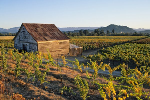 Above: A farmhouse surrounded by the vineyards of Dry Creek Valley