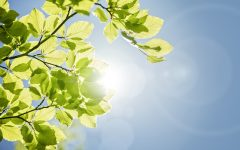 How To Live A More Eco-Friendly Life