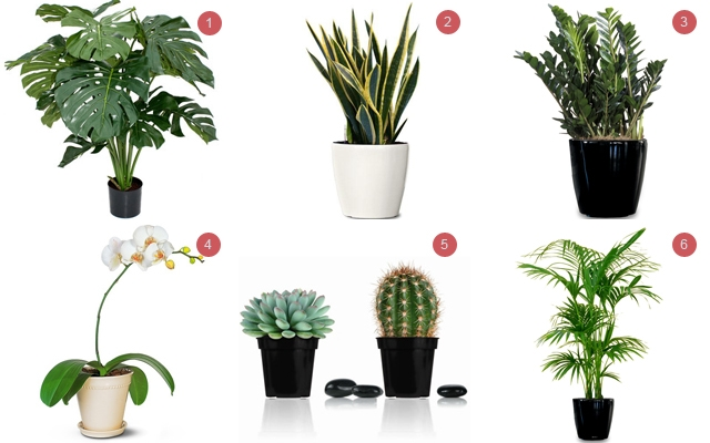 Above: 6 of our favourite low-maintenance house plants