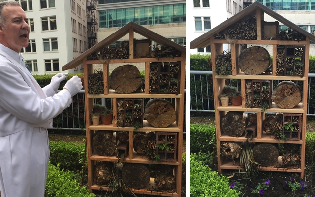 Above: Bee Butler Michael King shows off a sustainable resting space for solitary bees