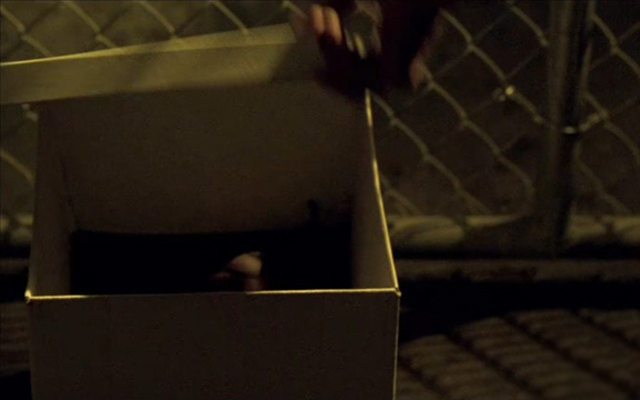 20-Things-You-Probably-Never-Knew-About-Prison-Break-Fox-Sara-Head-In-Box